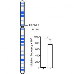 HUWE1
